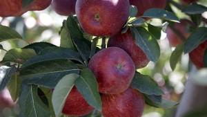 Favorita Fruit Company Group obtiene préstamo por USD 102 millones