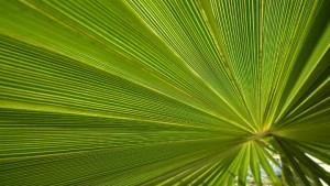 SFCB y Veirano en inversión de Moringa en Floresta Viva