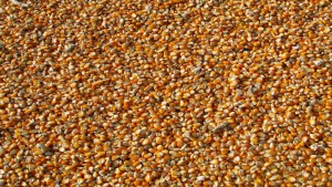 Cade autoriza venta de una participación de Agrícola Alvorada a Bunge Alimentos