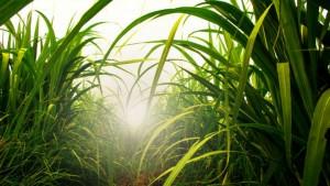 Gaia Agro emite en oferta pública CRA respaldados por Cocal
